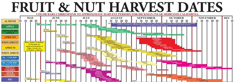 Fruit and Nut Harvest Dates