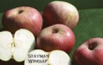 stayman_winesap3.jpg